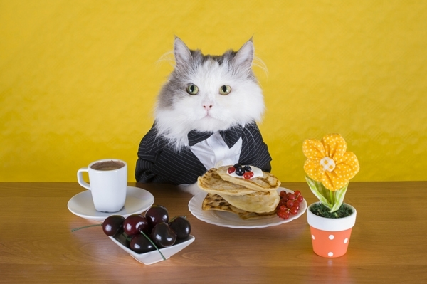 5 საშიში საკვები პროდუქტი კატებისთვის