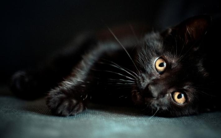 შავი შეფერილობის კატები