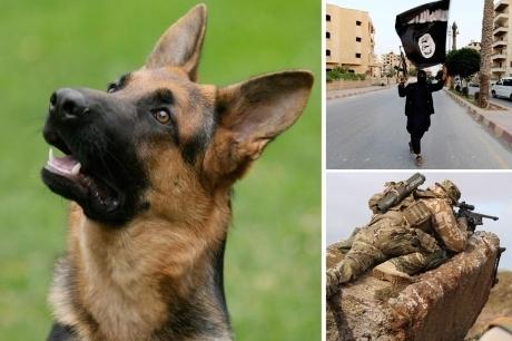 ერაყში ძაღლმა სპეცდანიშნულების რაზმი სიკვდილისგან იხსნა