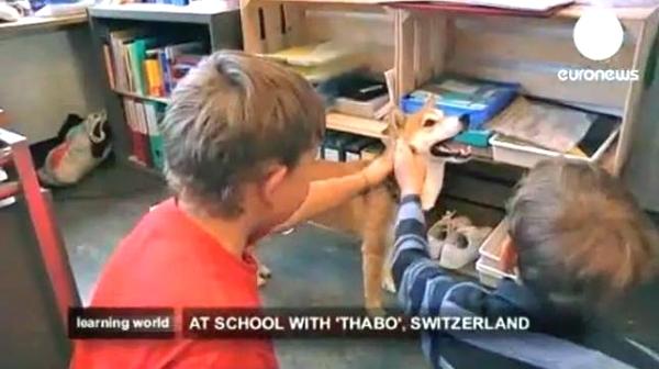ცხოველები სკოლაში - სიახლე განათლების სისტემაში (+ვიდეო)