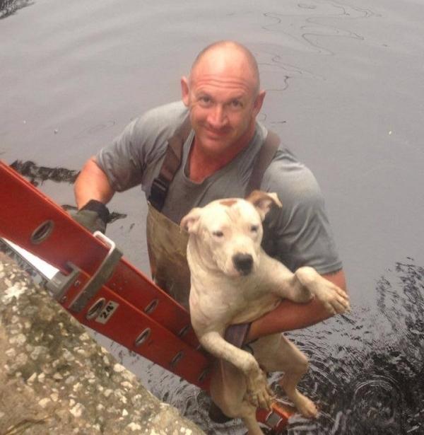 მაშველები წყალში ჩავარდნილი ძაღლის გადასარჩენად მივიდნენ. უეცრად ცხოველის უკან მათ დაინახეს….