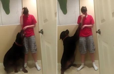 ძაღლი ცდილობს ხელი შეუშალოს აუტიზმით დაავადებულ ქალს, რათა საკუთარ თავს ზიანი არ მიაყენოს (+ვიდეო)