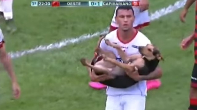 უპატრონო ძაღლმა ფეხბურთის მსვლელობის დროს მოედანზე გასეირნება გადაწყვიტა (+ვიდეო)
