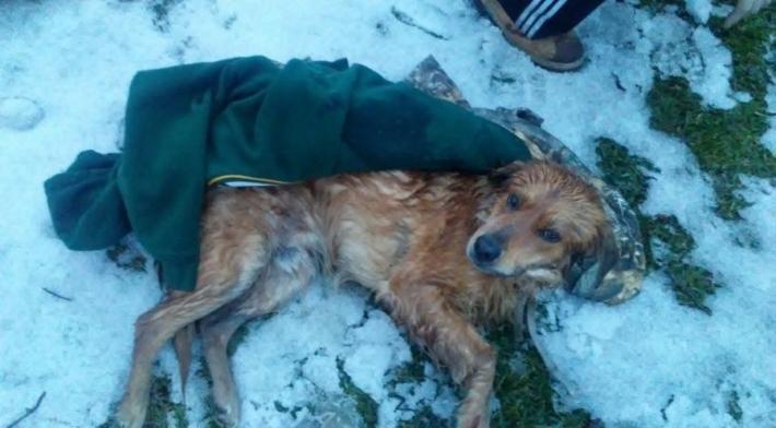 დაჭრილი ძაღლი თოვლში იწვა და მოთმინებით ელოდა დახმარებას
