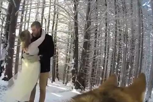 პატრონის ქორწილი ძაღლმა ვიდეო კამერაზე გადაიღო (+ვიდეო)