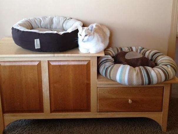 ეს კატები თქვენს საჩუქრებს სულ სხვა დანიშნულებით იყენებენ (+ფოტო)