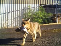 პოლიციელის კატა ქურდი აღმოჩნდა