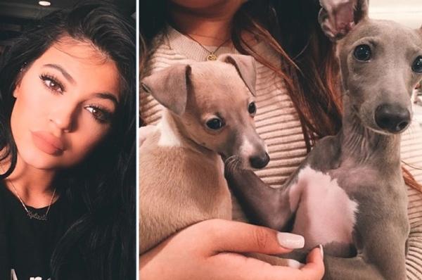 კარდაშიანების ოჯახის წევრს საკუთარი ძაღლებისადმი სასტიკ მოპყრობაში ადანაშაულებენ