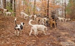 30-ზე მეტმა უსახლკარო ძაღლმა ბედნიერი ცხოვრების ახალი შანსი მიიღო (+ფოტო)