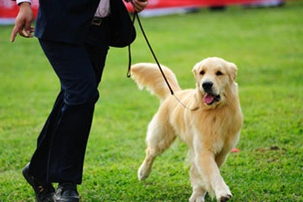 რა მნიშვნელობა აქვს ძაღლისთვის წვრთნას?