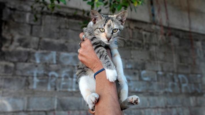 ახალი კანონით ბელგიაში ყველა კატას სტერილიზაციას გაუკეთებენ