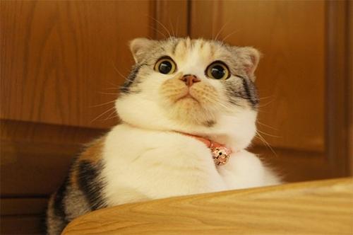 კატები, რომლებიც დრამატული როლისთვის ოსკარს იმსახურებენ