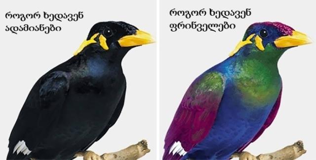 რა ფერებში აღიქვამენ გარემოს ფრინველები?