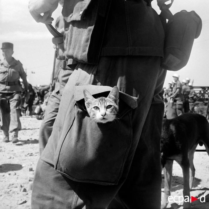 კატები ომში (+ფოტო)