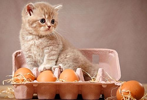 ადამიანისთვის განკუთვნილი 5 საკვები პროდუქტი, რომლებიც შეგიძლიათ, თქვენს კატას უწილადოთ