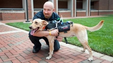ძაღლებისა და მათი პატრონებისთვის სპეციალური გადამცემი მოწყობილობა შეიქმნა