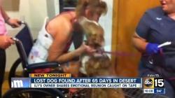 გადაბრუნებულ მანქანას პატრონი თავს ვერ აღწევდა.. ერთი ძაღლი ადგილზე დაიღუპა, მეორე კი არიზონას ცხელ უდაბნოში გაიქცა... (+ვიდეო)