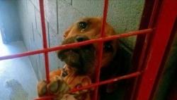 გახსოვთ ძაღლი, რომელიც თავშესაფარში ტიროდა? მან საბოლოოდ იპოვა მზრუნველი პატრონი