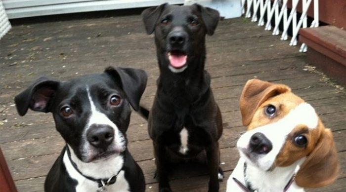 მეცნიერების დასკვნით, ძაღლებს ადამიანების საუბარი კარგად ესმით