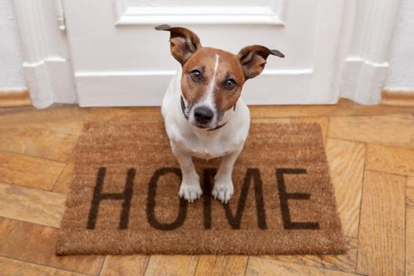 როგორ იქცევიან ძაღლები უცნობებთან