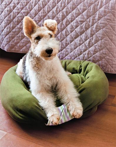 გააკეთეთ თქვენი ძველი ტანსაცმლისგან ძაღლის საწოლი