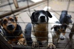 საკრებულოს კომისიაში უპატრონო ძაღლების თავშესაფართან დაკავშირებით შესულ წერილზე იმსჯელეს