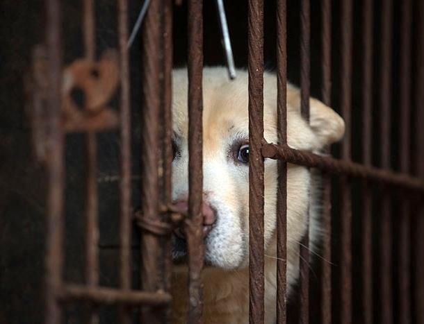 ტაივანი გახდა პირველი აზიური ქვეყანა, სადაც ძაღლებისა და კატების ჭამა აკრძალეს!