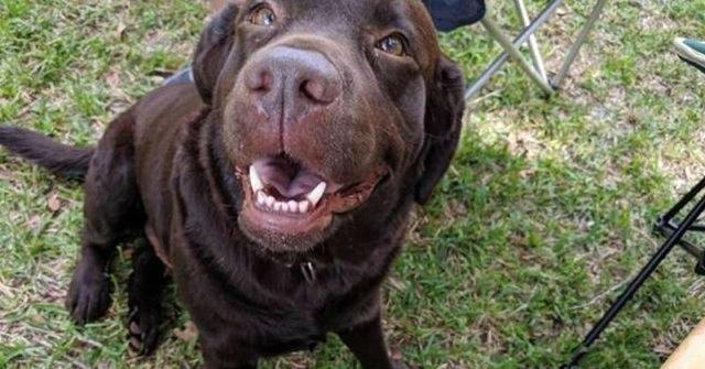 ძაღლი უცხო ოჯახში საკვების სათხოვნელად მივიდა, თუმცა მის ყელსაბამზე უცნაურმა ტექსტმა მასპინძლები გააოცა