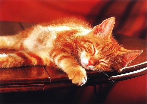 წითური კატები