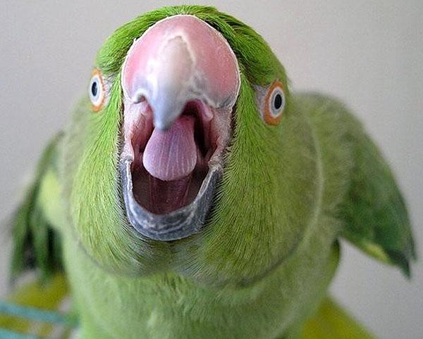"""თუთიყუშმა მთვრალი პატრონი პოლიციაში """"ჩაუშვა"""" და მასთან ერთად ციხეში აღმოჩნდა"""