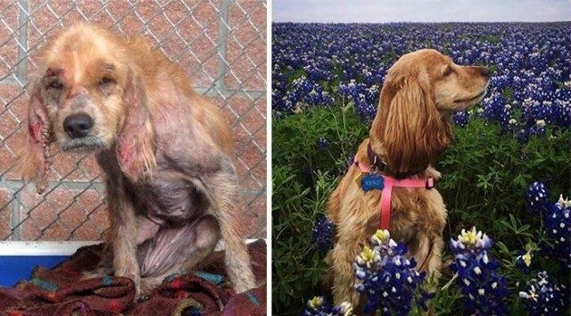 """""""მანამდე და შემდეგ"""", ძაღლების ემოციური ფოტოები, რომლებიც გულგრილს არავის დატოვებს"""