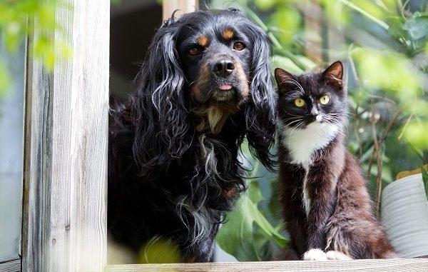 7 მიზეზი, თუ როგორ აუმჯობესებს ადამიანის ცხოვრებას შინაური ცხოველი