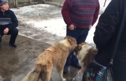 ლიანდაგზე ნაპოვნი უერთგულესი ძაღლების ამბის დასასრული... (+ვიდეო)