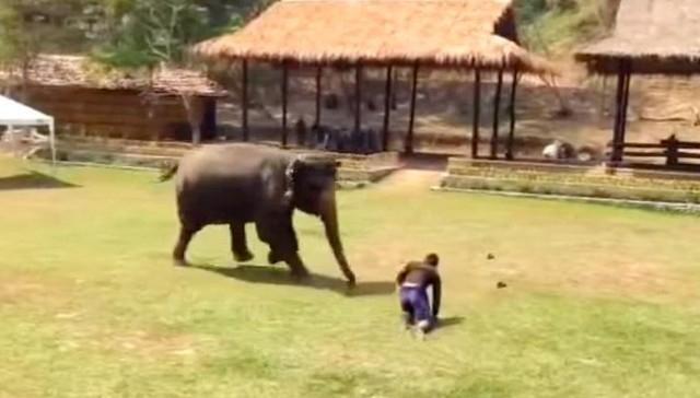 """სპილო თავის მომვლელს """"თავდამსხმელისგან"""" იცავს (+ვიდეო)"""