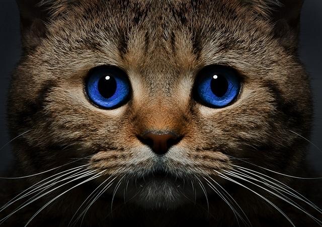 რატომ აგირჩიათ კატამ პატრონად?