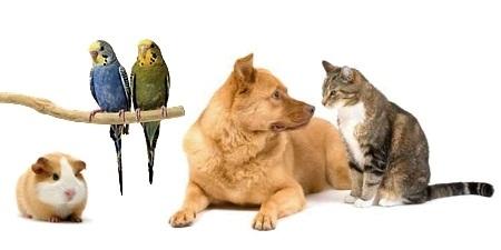 როგორ ეგუება ძაღლი სხვა ცხოველებს