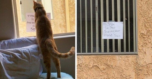 როგორ გავიცნოთ კატა, რომელიც ჩვენი სახლის მოპირდაპირედ ცხოვრობს? დაიწყეთ მიმოწერა ფანჯარაზე გაკრული ფურცლების დახმარებით