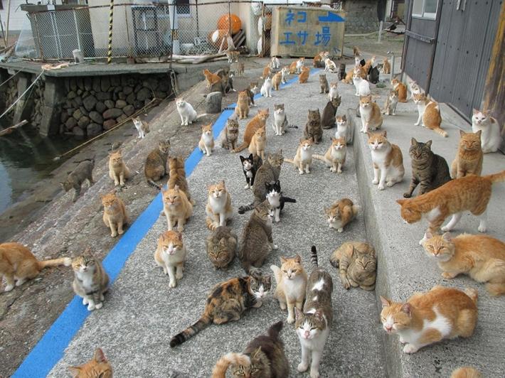 ინტერნეტის მომხმარებლებისგან გაგზავნილმა კატის საკვებმა კატების კუნძული დაფარა... (+ფოტო)