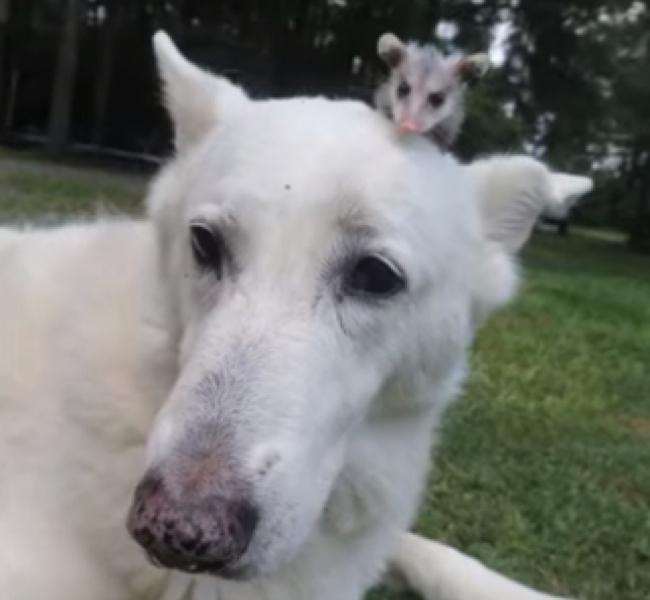 ვერ წარმოიდგენთ, თუ რას უწევს მზრუნველობას დედა ძაღლი(+ვიდეო)