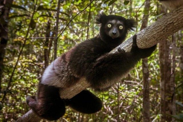 9 ცხოველი, რომლებსაც ზოოპარკში ვერასოდეს ნახავთ