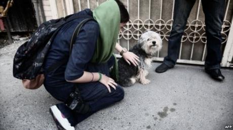 ძაღლების ყოლა და მათი ქუჩაში გასეირნება გამათრახებით დაისჯება