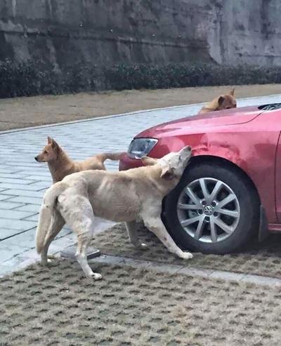 ძაღლი მძღოლმა ავტოსადგომიდან გააძევა, ის დაბუნდა თავის მეგობრებთან ერთად და ვერ წარმოიდგენთ, რა გააკეთა