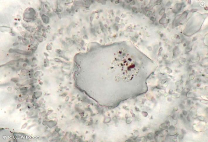 კანადაში დედამიწაზე უძველესი ორგანიზმი აღმოაჩინეს (+ვიდეო)