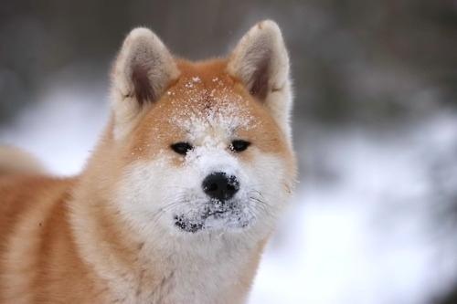 ძაღლის 10 უძველესი ჯიში