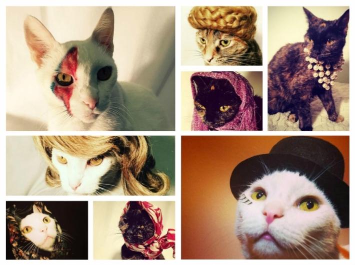 ყველაზე მოდური კატები (+ფოტო)
