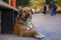 ბუკიას ბაღის ცუგები - ანუ ადგილი, სადაც ქუჩის ძაღლები  მშვიდად და ბედნიერად ცხოვრობენ! (+ფოტო)