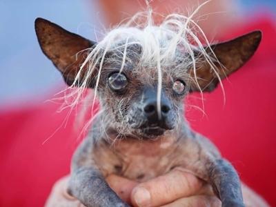 13 ყველაზე უშნო ძაღლი