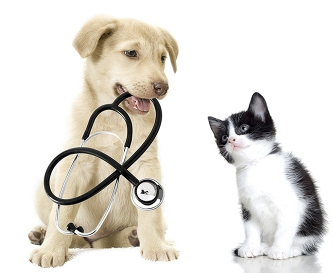 ვეტერინარები: ჰომეოპათიური მკურნალობა ცხოველებისთვის მავნებელია