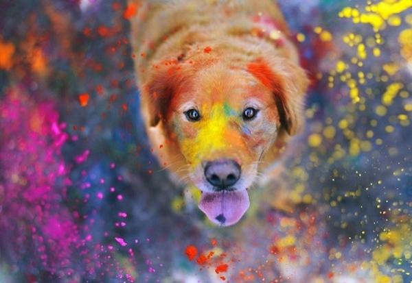 ჯესიკა ტრინის ბედნიერი ძაღლები
