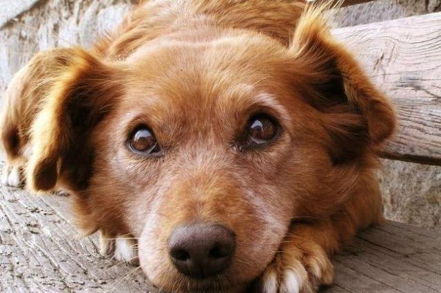 4 ნიშანი, რომ თქვენი ძაღლი ნამდვილად გენდობათ
